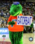 Albert E Gator Florida Gators Photo