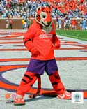 The Tiger Clemson Tigers Photo