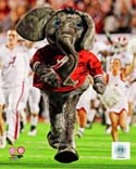 School Mascot Alabama Crimson Tide Photo