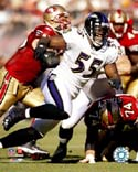 Terrell Suggs Baltimore Ravens Photo